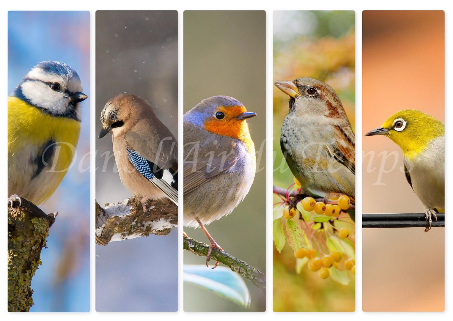 marque page oiseaux 1.jpg