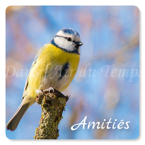 Carte photo Amitiés 7 Oiseaux Mésange bleue