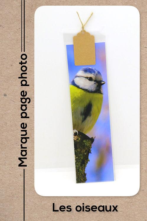 Oiseaux modèle 17 Mésange bleue
