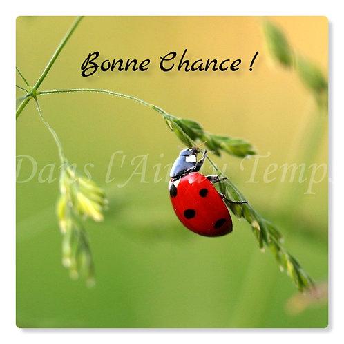 Carte photo Bonne chance 2 Coccinelle