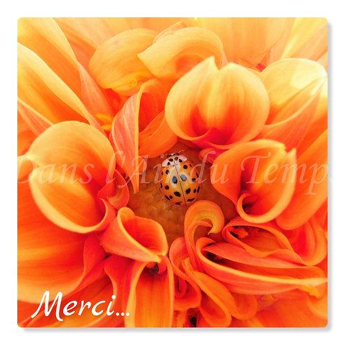 Carte photo Merci 2 Fleur et coccinelle