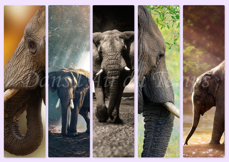 MARQUE PAGE ELEPHANT 01.jpg