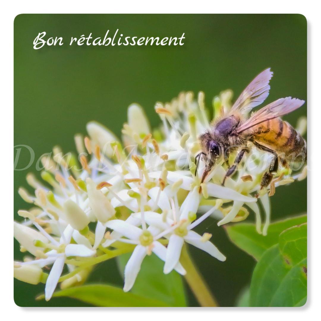 cartebonretablissement2.jpg