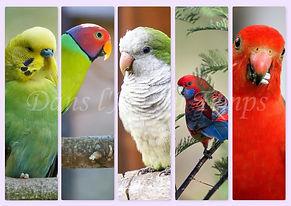 marque page oiseaux PERRUCHE.jpg