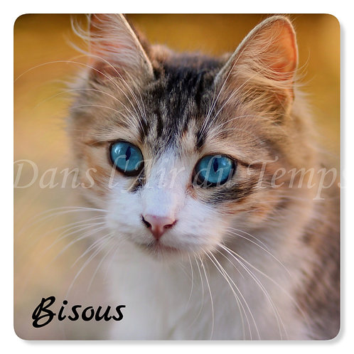 Carte photo Bisous 6 Chat