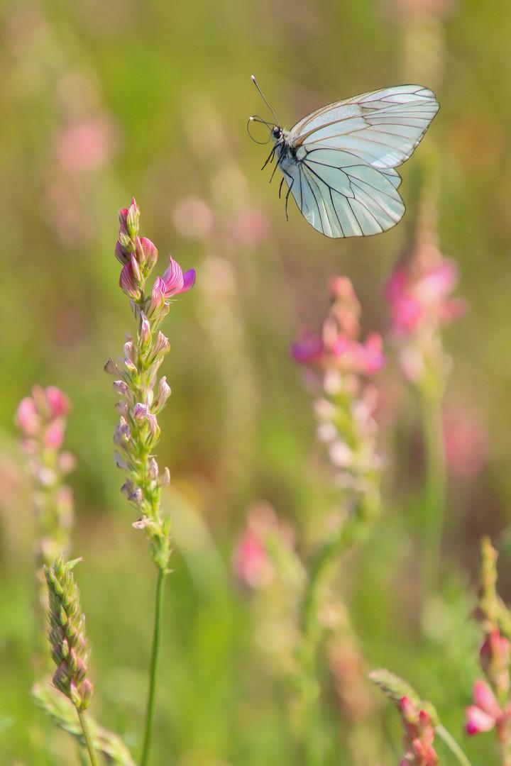 butterfly-5227478_1920.jpg