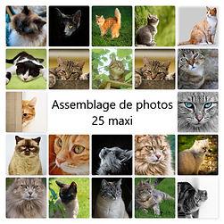 assemblage de photos.jpg
