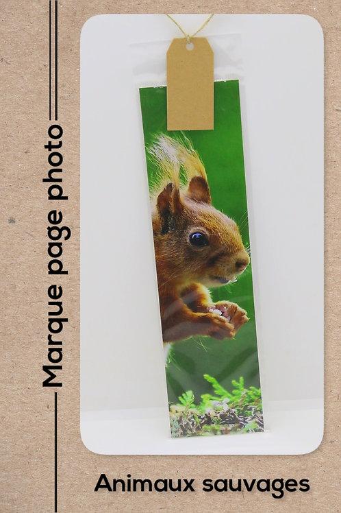Animaux sauvages modèle 3 Ecureuil