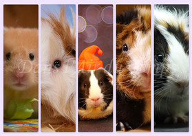 MARQUE PAGE HAMSTER 1.jpg