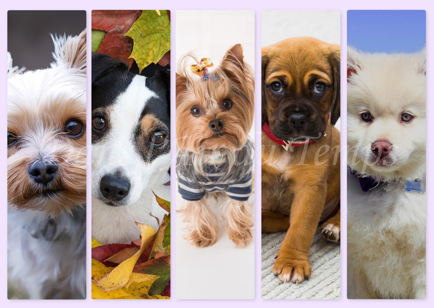 marque page chien 5.jpg