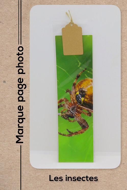 Insectes modèle 11 Araignée