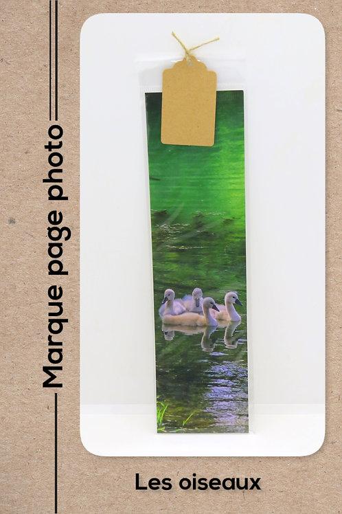 Oiseaux modèle 32 Bébés cygnes