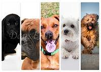 marque page chien 3.jpg