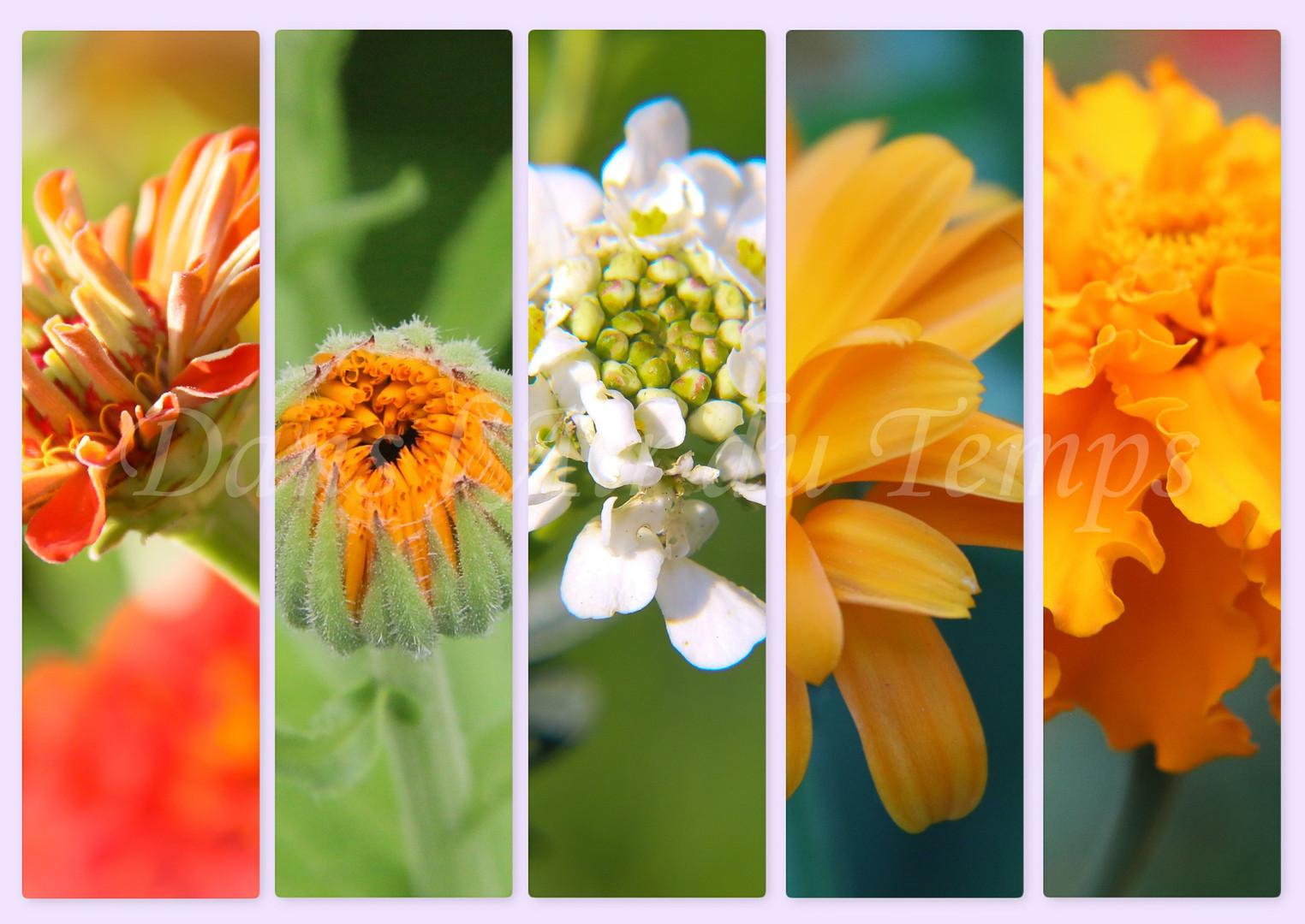 marque page fleur 6.jpg