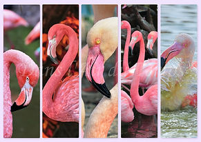 marque page flamand roses.jpg