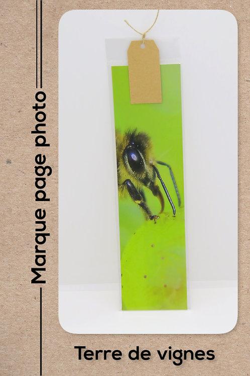 Insectes modèle 3 Abeille