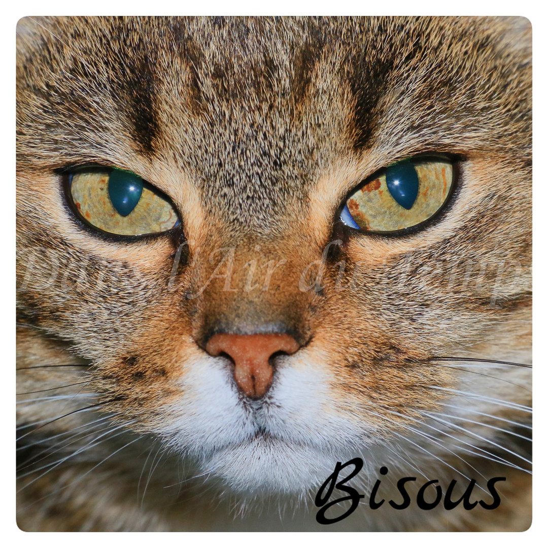 carte bisous chat.jpg