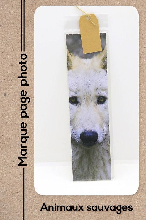 Animaux sauvages modèle 2 Loup