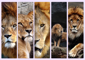marque page lion 1.jpg