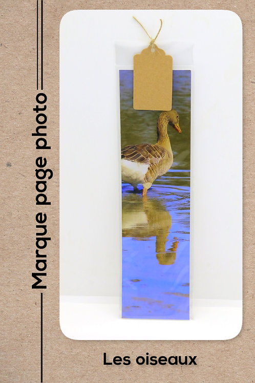 Oiseaux modèle 22 Oie en reflet