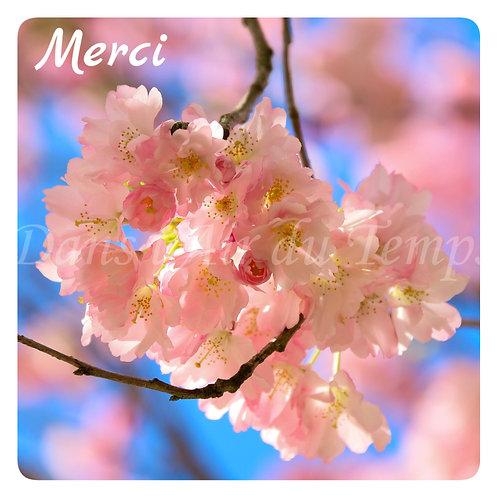 Carte photo Merci fleurs de cerisier