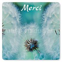 carte de remerciement fleur de pissenlit