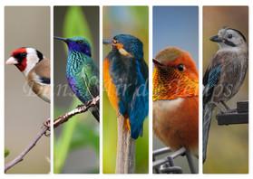 marque page oiseaux.jpg