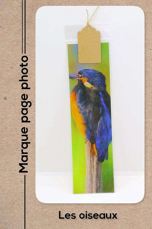 Oiseaux modèle 13 Martin Pêcheur