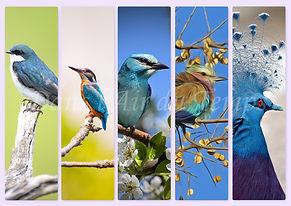 marque page oiseaux