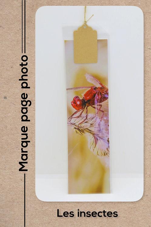Insectes modèle 7 Libellule rouge
