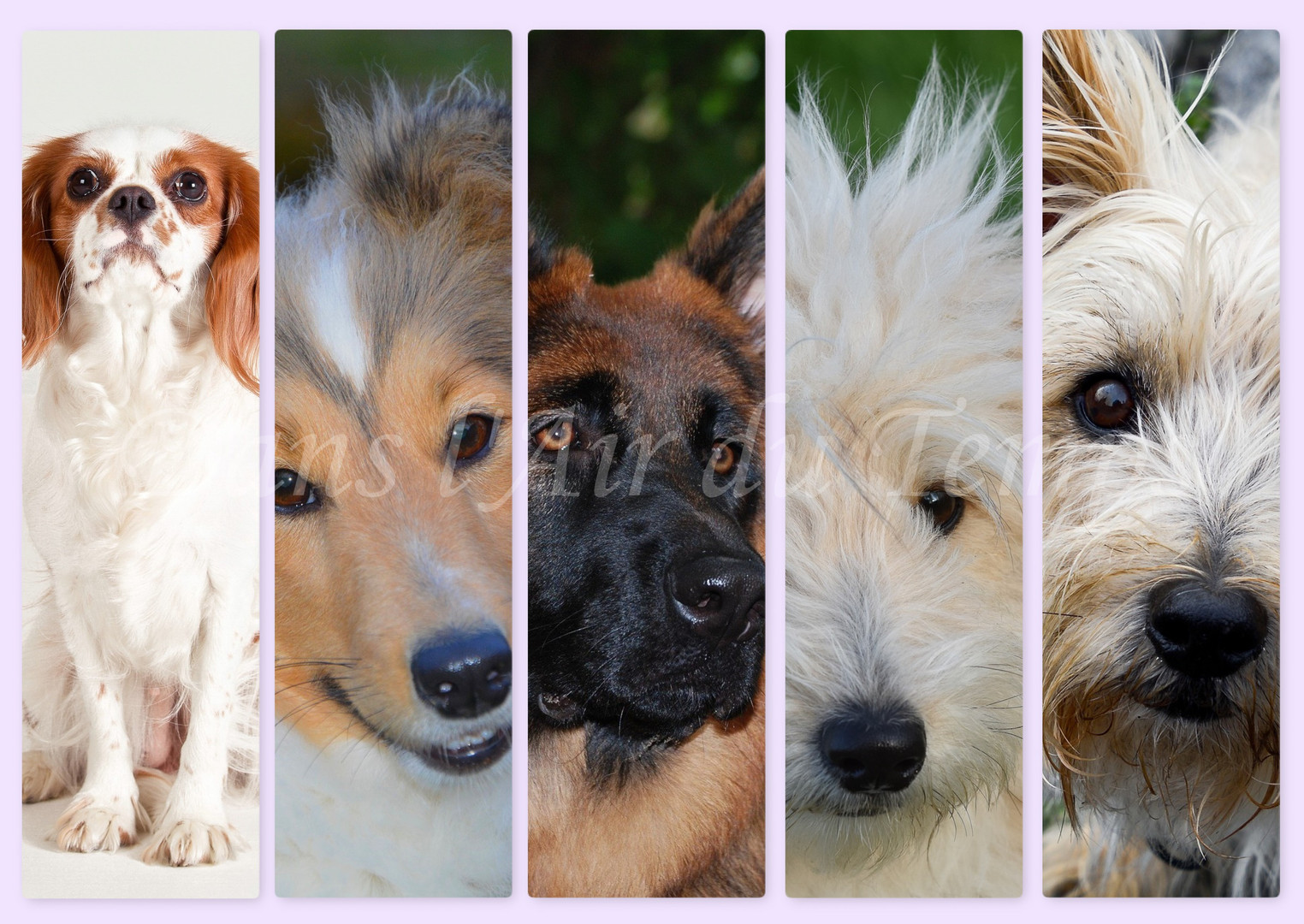 marque page chien 4.jpg
