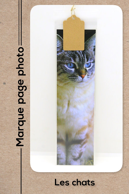 Le chat de la ferme modèle 28