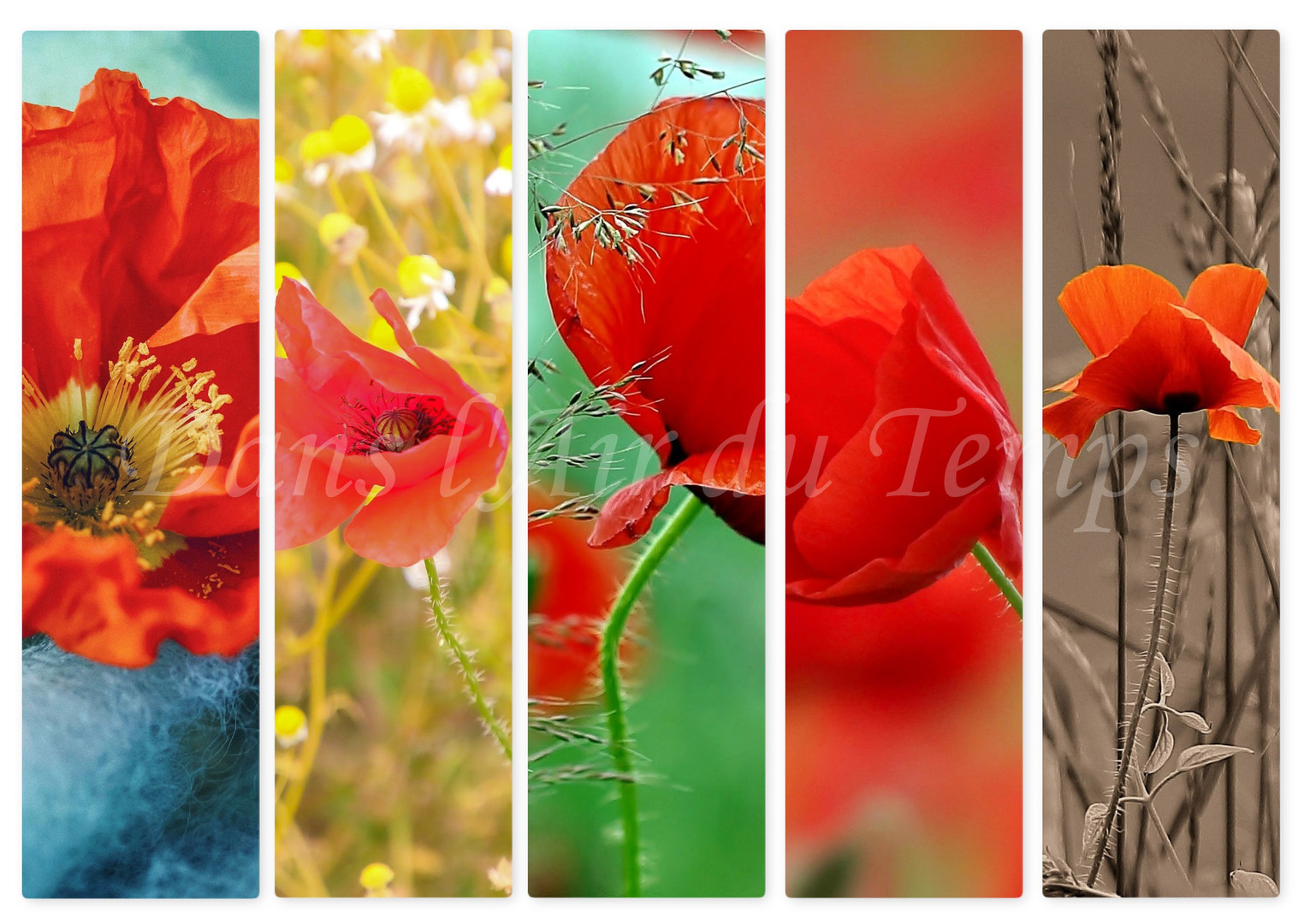 marque page fleurs 2.jpg