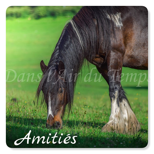 Carte photo Amitiés 3 Cheval