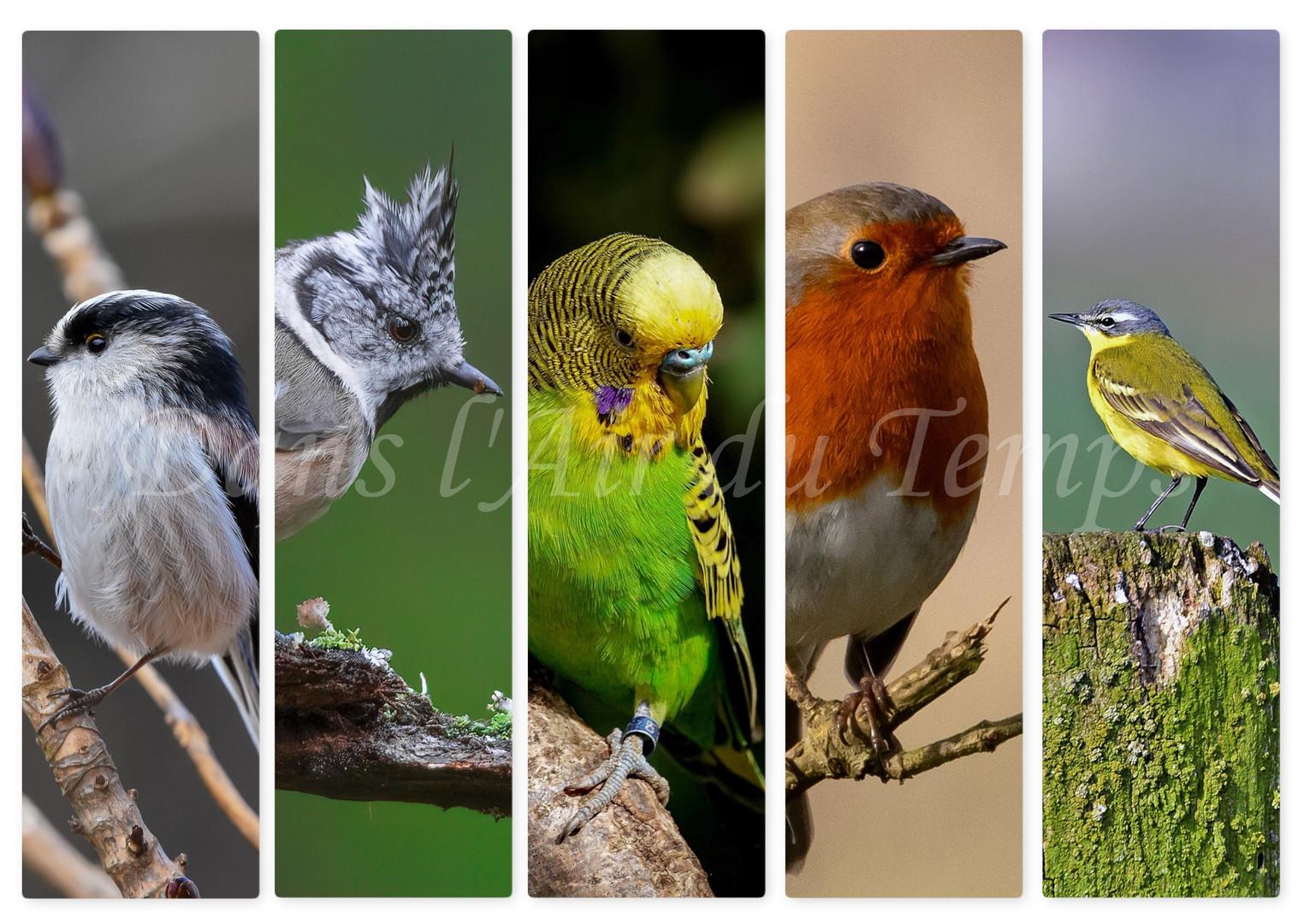 marque page oiseaux 3.jpg
