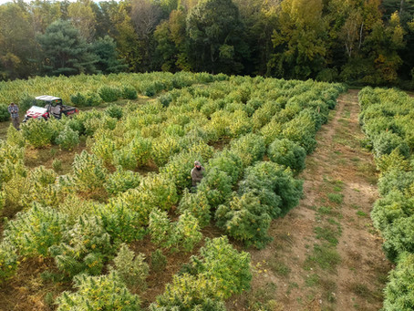 NYS DOH Lifts Proposed Hemp Flower Ban