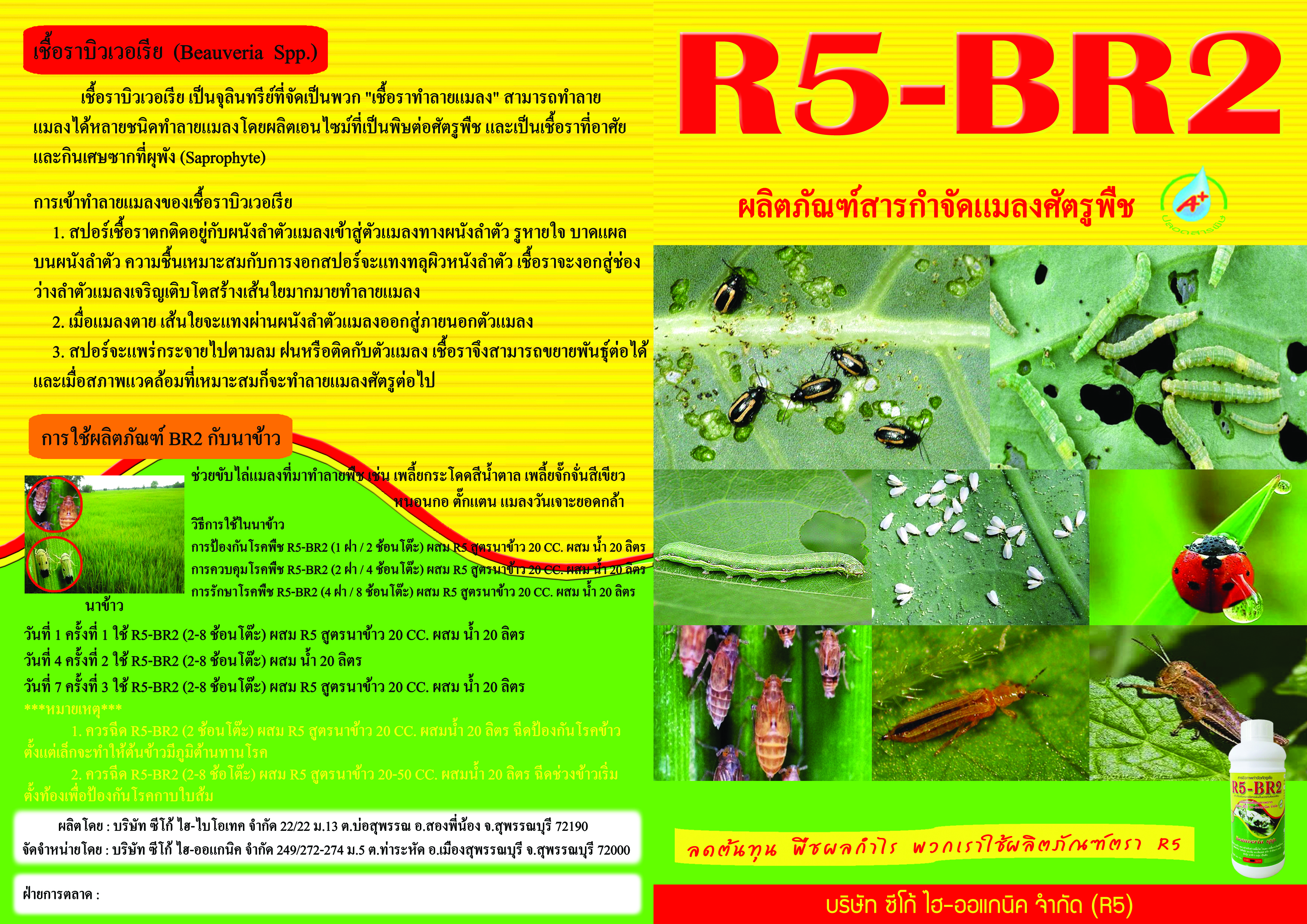 BR2-newนอก