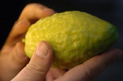 Esrog Citron
