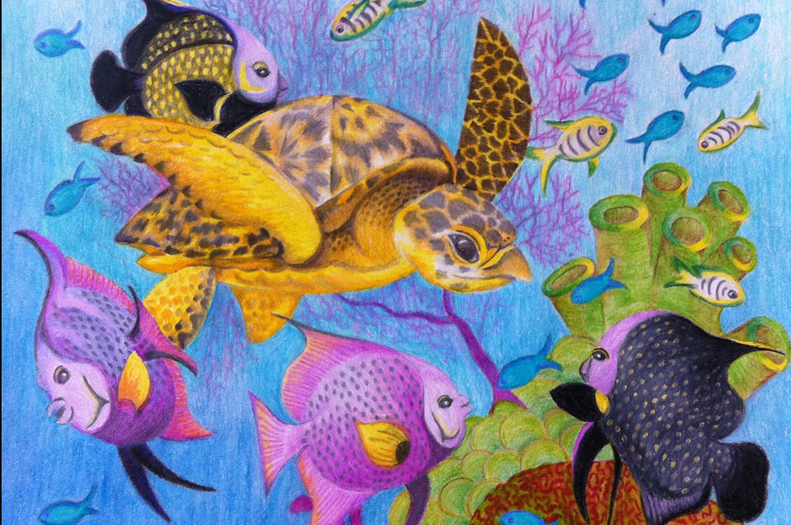 Sea-Turtle-Drawing-5x5.jpg