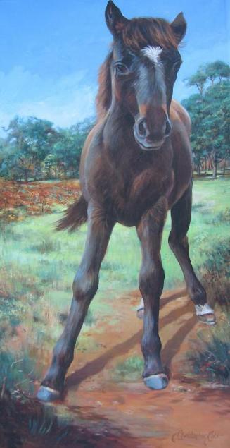 """""""Wild Black Foal"""""""