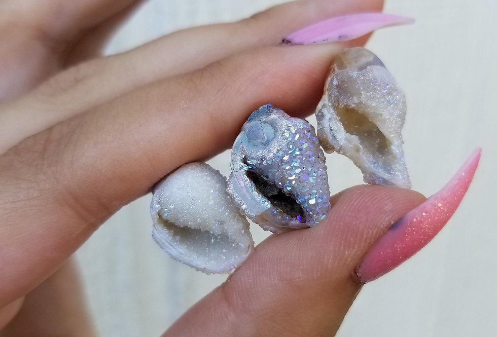 Angel Aura Druzy Seashell Fossil