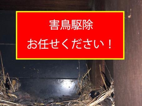 害鳥駆除、お任せください!