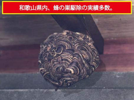 紀美野町にて蜂の巣駆除を行いました。
