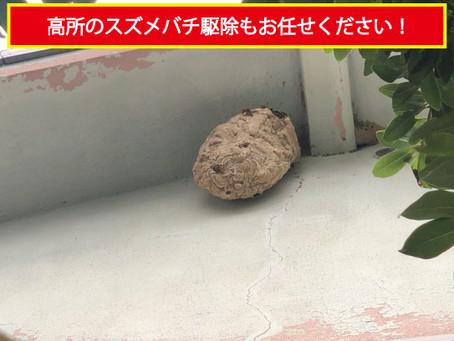 【和歌山市】高所のスズメバチ駆除もお任せください!