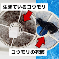 コウモリ駆除3.jpg