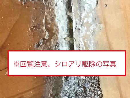 【海南市】シロアリ駆除予防に行ってきました。