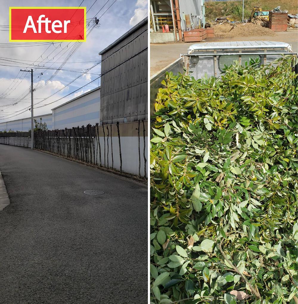 和歌山市 剪定 枝葉回収