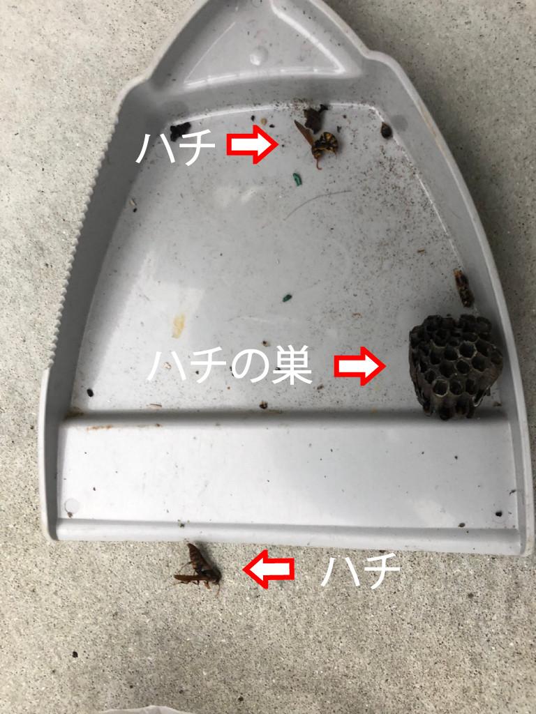 大阪府泉南市、ハチ駆除