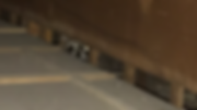 アライグマ・イタチ画像