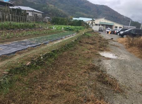 海南市にて草刈り(草刈り機使用)